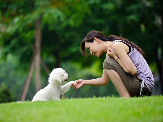 A Woman Trying to Communicate by Shaking Hand While Training Her Dog