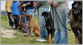 Owners Holding Leash of Their Dogs During Training