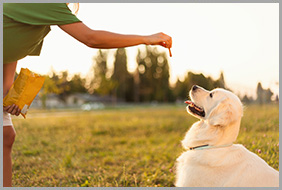 Dog owner giving a treat to his dog while its obedience training