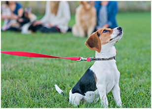 How to Prepare for Your Dog's First Obedience Class