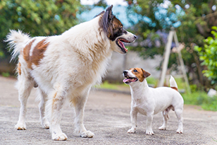 The Importance of Aggressive Dog Training