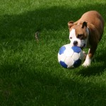 Dog with ball in grass