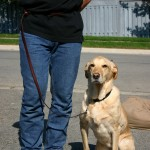 Proper Dog Training Tips To Help Set The Right Foundation