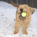 A dog with ball in mouth