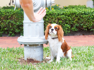 giving instructions while potty training a dog