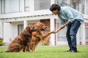 A Man Training His Two Dogs By Shaking Hands in Toronto