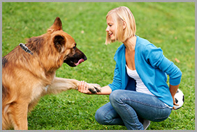 Female Dog Trainer Shaking Hands With a Dog in Georgina