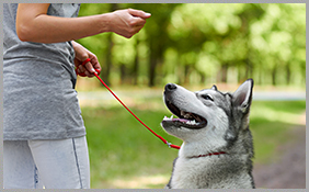 Dog Training Services Richmond Hill