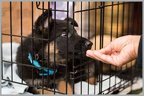 A Puppy Undergoing Crate Training