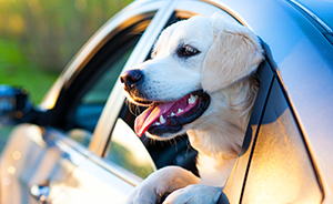 Travel With Your Dog