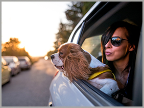 Keeping Pets Safe in Car