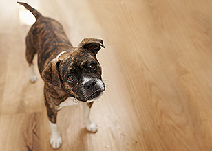 Advantages of dog obedience training Classes