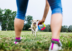 The Basics of Dog Training Every Pet Owner Should Know