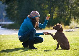 Puppy Training to Make Your Pup Happy