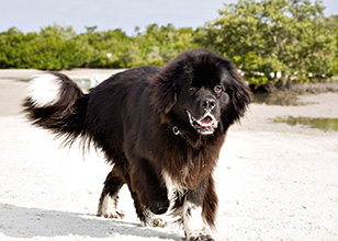 What are the Benefits of Off-Leash Dog Training?