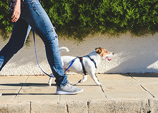 7 Ways to Make Your Dog Walk More Fun & Effective