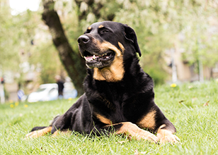 What to Consider When Training Aggressive Dogs