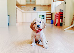 How to Deal with Puppy Potty Training Problems