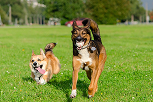 7 Approaches to Calm an Aggressive Dog